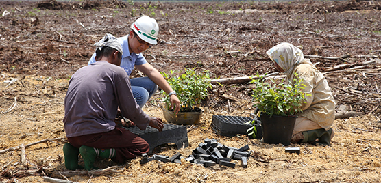 Son Nico Jonathan and fellow workers are replanting the Acacia trees on a newly harvested plantation site